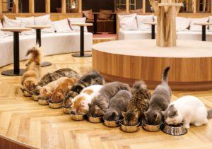 ペットを飼えない人にもおすすめしたい!癒し系アニマルカフェ