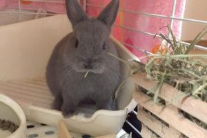 ウサギってどうお世話すれば良いの?