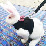 ウサギのお散歩ってなぁに?