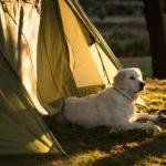 ペットとキャンプ