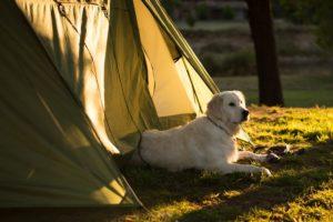 いざゆかん?ペットとキャンプへ!