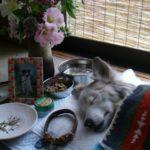 犬や猫は一緒に暮らした仲間の死は分かるの?