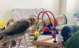 インコとおもちゃ