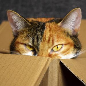 猫はストレスに弱い