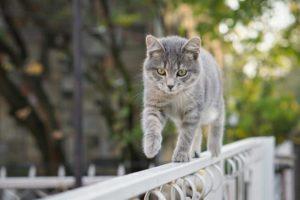 猫のバランス感覚
