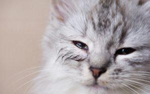 「猫」の亡くなる直前の行動を見極める