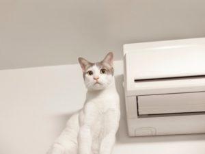 ペットのための冷房対策 その①
