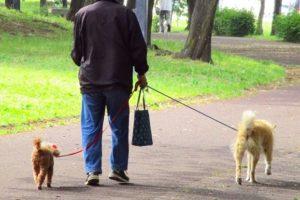 高齢犬と散歩を楽しむには?