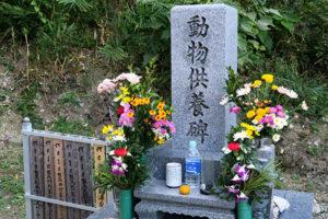 ペットの葬儀文化について