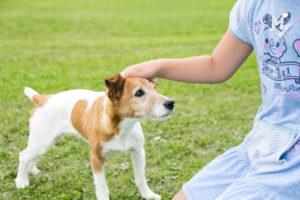 あなたの犬が幸せかどうかを知らせる5つの兆候