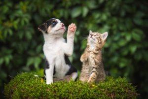 ペットのしつけのやり方が分からない・・そんなあなたの強い味方