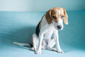 気づこう!犬が発するストレス症状について