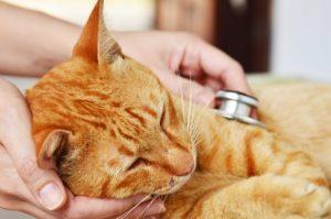 ペットの安楽死について…