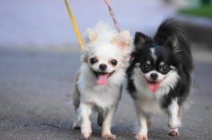 ペットと散歩の意味とは?