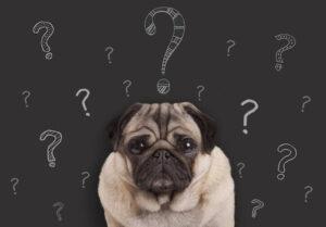 犬に関する雑学