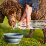 ワンちゃん・ネコちゃんはよく水を飲む?
