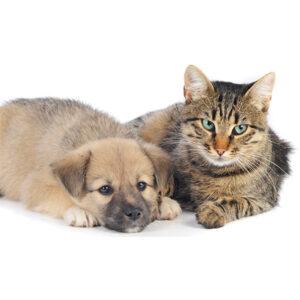 ペットを飼うならぜひ知っておきたい!ペット用の保険について