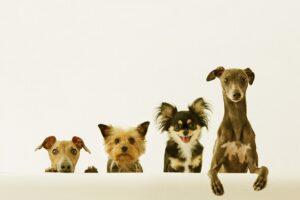 ペットの寿命は?人間に置き換えるとどれくらいなの?